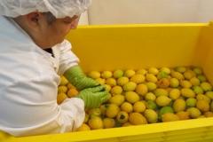 Lavaggio a mano dei limoni