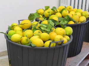 Solo limoni Italiani e Biologici
