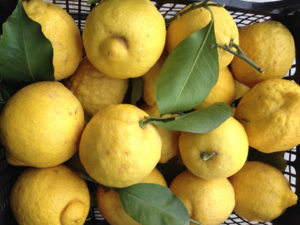 Limoni per infusione