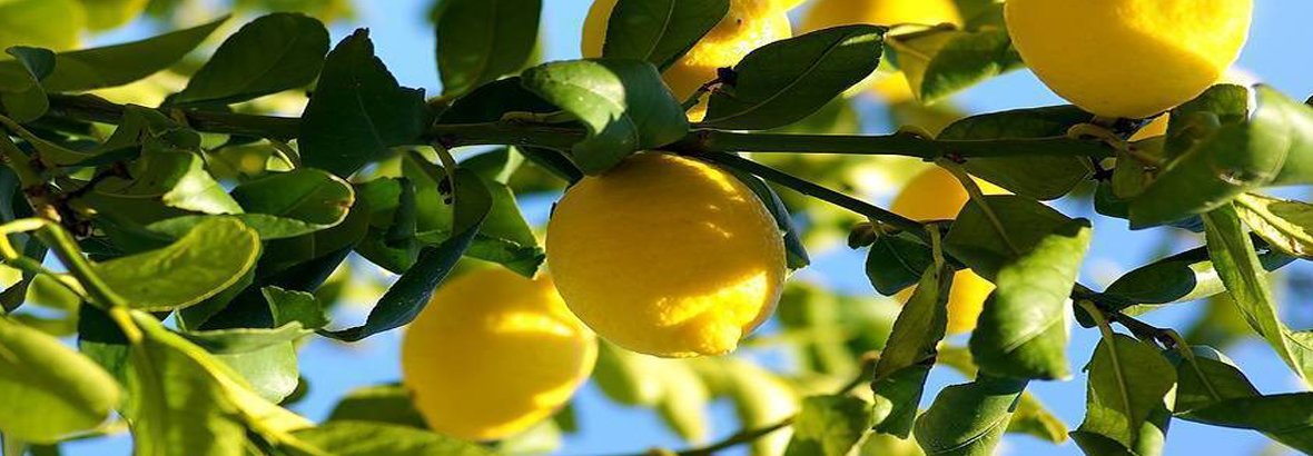 Only natural and fresh lemon       